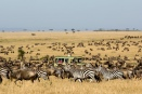 Asilia safari vehicle in the thick of the wildebeest migration