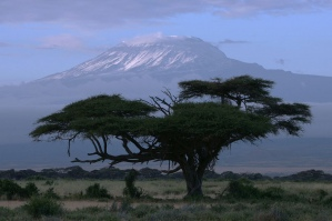 Acacia and Kilimanjaro in Tortilis Camp